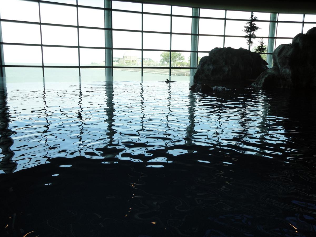 Shedd Aquarium - Abbott Oceanarium
