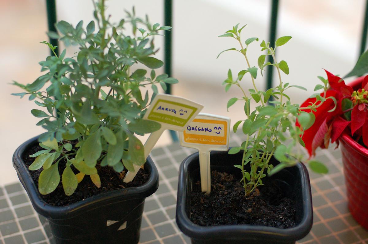 As plantinhas de Winterfell - Orégano e Arruda