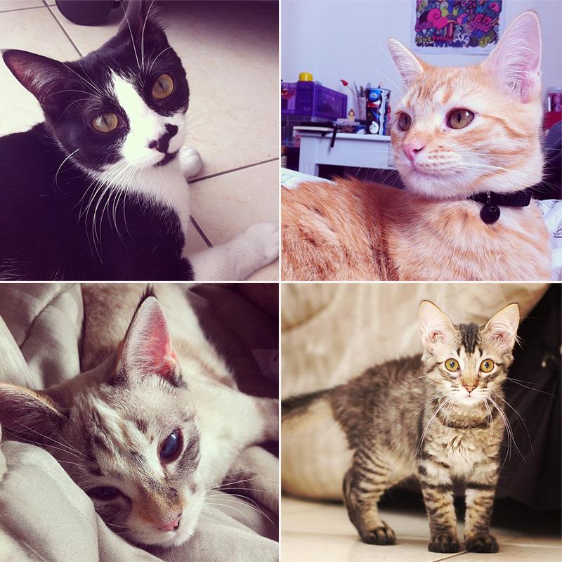 Arya, Jamie, Lexie, Thorin