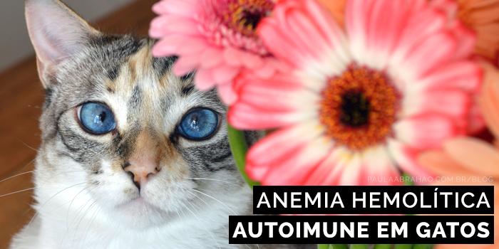 Paula Abrahão | BLOG - Anemia Hemolítica Autoimune em Felinos