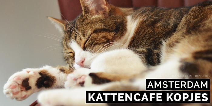 Paula Abrahao   BLOG - Kattencafe Kopjes, o primeiro cat café da Holanda